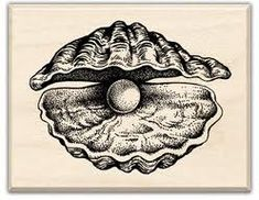 oyster shell drawing - Google Search