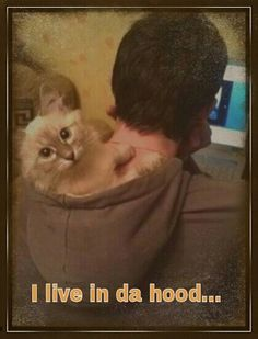 look...it's the cat from the hood!