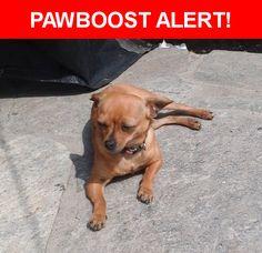 Please spread the word! Vicky was last seen in Santa Ana, CA 92703.    Nearest Address: West 6th Street, Santa Ana, CA, United States