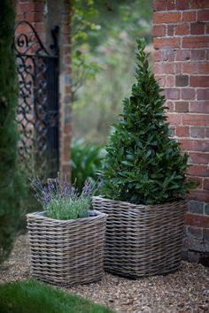 Bay and lavender in wicker planters, beautiful. Satisfying Spaces