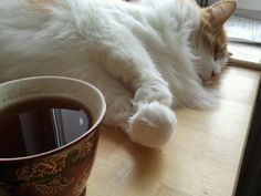 Tea and the Cat