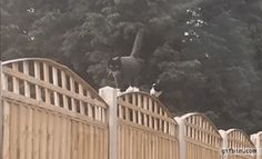 Cat gets bullied by a magpie on a fence. Gif Bin is your daily source for funny gifs, reaction gifs and funny animated pictures! Large collection of the best gifs. Best Funny Pictures, Funny Photos, I Miss My Boyfriend, Kraken, Magpie, Cat Gif, Beautiful Cats, Make Me Smile, Cute Cats