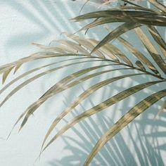 tags // pale, pastel, blue, tumblr, plants, love, sky, palm tree acc | @kittyrxse