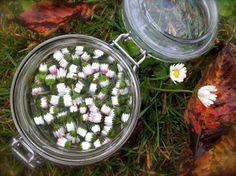 Domácí tinktura z květů sedmikrásek proti nachlazení |