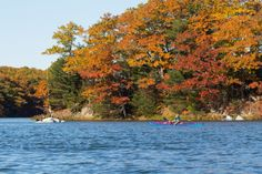 If you're anywhere close to Maine and looking for great autumn paddling, check out the Amazing Reversing Bagaduce