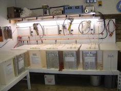 Large Hobby Plating Anodizing Electropolishing Tank Kits for Sale, Custom Studio Kit, Chem Film