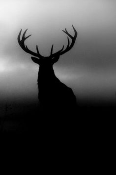 Deer black white gray sky dad