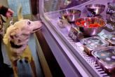 Un restaurante de comida casera para perros y gatos