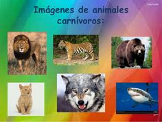 Clasificación de animales según su alimentación Social Platform, Husky, Fox, Animals, Science, Animal Classification, Wedding Dress Blue, Preschool Songs, Science Nature