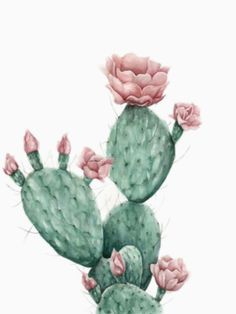 Wüstenblume - Kunstdruck, Best Picture For Cactus classroom For Your Taste You are looking for something, and it is going to tell you exactly what you are looking for, and you Art Prints, Watercolor Art, Artwork Prints, Cactus Art, Flower Prints Art, Painting, Watercolor Flowers, Art, Plant Art