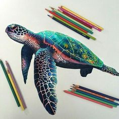 Perfect pictures. turtle drawing