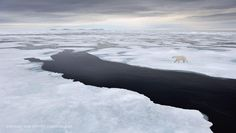 Ice Patrol Photo by Marsel van Oosten — National Geographic Your Shot