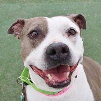 Pin On Senior Dogs To Adopt
