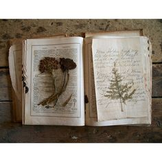 """""""Naturalist - I have pressed flowers for many years. It is a wonderful pass time and I have used many in my books. Princess Grace had written books on the process"""". Nature Journal, Book Of Shadows, Natural History, Alchemy, Dried Flowers, Bunt, Tarot, Journaling, Vintage World Maps"""