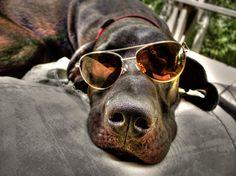sunglasses + dog (1103×827)