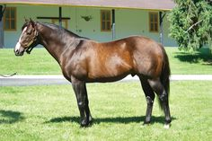 War Front(2002)Danzig- Starry Dreamer By Rubiano. 2x5 To Northern Dancer, 5x5 To Hyperion. 13 Starts 4 Wins 5 Seconds 1 Third. $424,205. Won Alfred G Vanderbilt BC H(G2), Princelet S. Entered Stud At Claiborne Farm In Ky.
