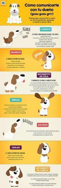 Infografia para entender a tu perro