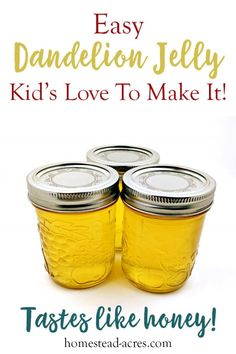 This is such a easy jelly recipe for beginner canners. Enjoy making this fun and unique flower jelly with your kids. Step by step photos makes this the perfect unusual jelly to get started with. It tastes just like honey and is sure to be enjoyed! Jelly Kid, Dandelion Jelly, Dandelion Recipes, Dandelion Jam Recipe, Homemade Jelly, Homemade Gifts, Jelly Recipes, Easy Jam Recipes, Herb Recipes
