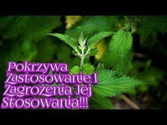 Pokrzywa Właściwości I ZAGROŻENIA Stosowania Jej!!!! - YouTube