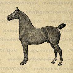 Digital Printable Coach Horse Graphic Illustration Image Download Vintage Clip Art Jpg Png Eps 18x18 HQ 300dpi No.3107 @ vintageretroantique.etsy.com