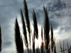 Grasses in the Sun...