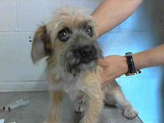 This DOG-ID#A469302  I am a female, black and tan Terrier. Shelter staff think I am about 4 months old. I have been at the shelter since Jul 17, 2014.  If you are my owner, you must physically come to the shelter to claim me. We are located at 333 Chandler Place, San Bernardino, CA 92408. Our Lost & Found hours are Tuesday-Saturday 10:00 am to 5 pm.