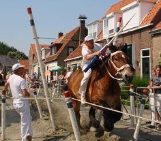 Rienk-rieën (Ringrijden) Zeeland, The Netherlands. Holland, Kingdom Of The Netherlands, Going Dutch, Draft Horses, North Sea, Gentle Giant, Sea Level, My Heritage, Horse Tack