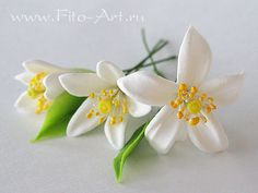 Wedding: Orange Blossom - Fito Art  , this was my dream wedding flower, I think they would have been lovely..but certainly not available on my wedding day.