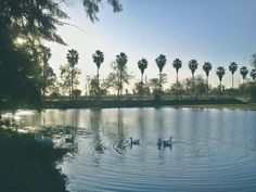 Cisnes naturaleza sky water life