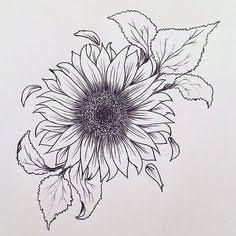 sunflower illustrations free - Google Search