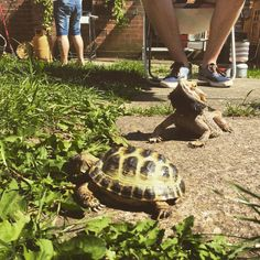 Day 5: Today's theme is hot so here's a photo from the barbecue we had at Dad's yesterday (Just to clarify we didn't eat the tortoise or dragon they're just some of the pets we had out k. Also I witnessed a lot of dragon and bunny sex yesterday nice)