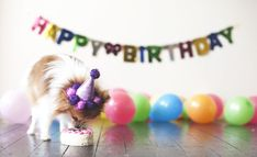 enjoy the day with your pup and have a Dog birthday party! Puppy Birthday, Animal Birthday, Puppy Pictures, Dog Photos, Happy National Dog Day, Dog Tumblr, Best Puppies, Puppy Party, Training Your Puppy