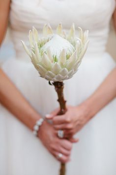 Make a statement with a single Protea flower bouquet. Flor Protea, Protea Bouquet, Protea Flower, Protea Wedding, Wedding Flowers, Wedding Colors, White Flowers, Beautiful Flowers, Wedding Inspiration