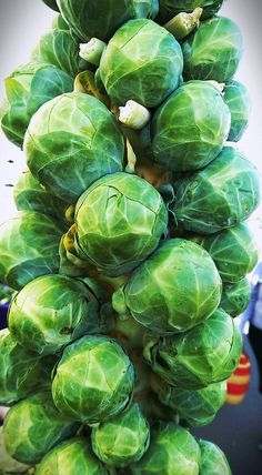 brussel sprouts Sprouts Vegetable, Vegetable Gardening, Fruit And Veg, Fresh Fruit, Broccoli Plant, Spicy Green Beans, Vegetables Photography, Fruits Images, Bountiful Harvest