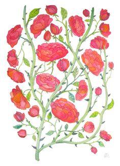 rose bramble botanical large original gouache watercolor painting