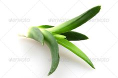 Aloe Vera ...  aloe, alternative, background, beauty, bitter, botany, cactus, care, closeup, color, cosmetic, cure, dermatology, detail, drop, fresh, gel, green, health, healthy, herb, herbal, ingredient, isolated, juice, leaf, macro, medical, medicine, nature, organic, plant, skin, skincare, succulent, thorn, treatment, vera, water, wet, white