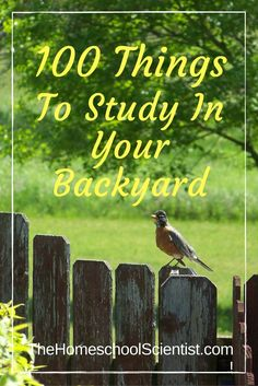 100 Things To Study In Your Backyard - The Homeschool Scientist