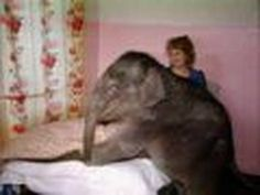 Elephant Lives With Family
