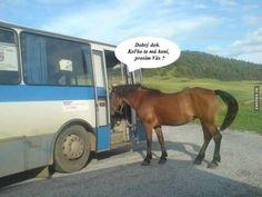 Výsledek obrázku pro vtipy o koních Funny Memes, Jokes, Humor, Animals, Animales, Husky Jokes, Animaux, Humour, Memes