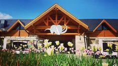 Tavaszi Resort  : avalonresort.hu : sales@avalonresort.hu : 06 46 200 241 #avalonresort #miskolctapolca #Bükk #tulips #spring #relax #nature #sunnyday #holiday #freshair #ourhotel #dailygram