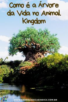 A Árvore da Vida é o símbolo do Animal Kingdom. Ela tem dezenas de animais esculpidos em seu tronco e pode ser vista de diversos pontos do parque. #treeoflife #arvoredavida #animalkingdom #disney #disneyworld