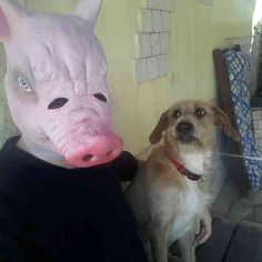 Oink, oink: | 29 Dog Pictures That Are Never Not Funny