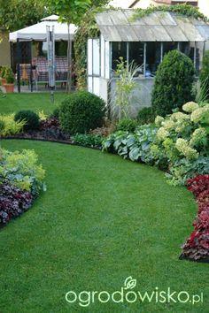 Ogród mały, ale pojemny;) - strona 48 - Forum ogrodnicze - Ogrodowisko