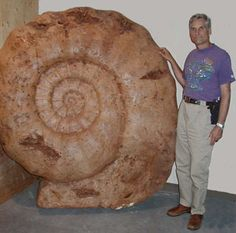 Very large ammonite. Can you just imagine if these were still cruising through our oceans at this size???!!!???