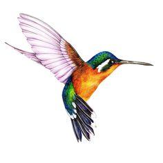 48 Ideas Humming Bird Art Watercolor Hummingbird Painting For 2020 Hummingbird Illustration, Hummingbird Drawing, Watercolor Hummingbird, Hummingbird Tattoo, Watercolor Bird, Watercolor Animals, Bird Drawings, Animal Drawings, Art Aquarelle