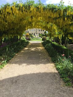 The golden chain archway at Brodsworth Hall, the inspiration for the setting of Across the Blue. Photo by Michelle Griep Falling In Love With Him, One Pilots, Historical Romance, World, Blue, Inspiration, Biblical Inspiration, The World, Inspirational