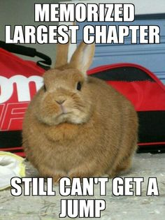 """Carrots the quizzer"" I can relate to this one Crazy Funny Memes, Wtf Funny, House Rabbit Society, Bible Quiz, I Understood That Reference, Funny Rabbit, Try Not To Laugh, I Can Relate, Puns"