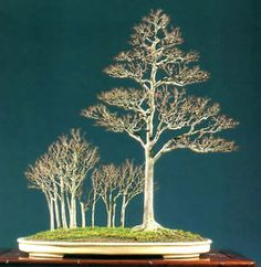 Artistic Principles of Bonsai Design - Challenges Inherent to ...