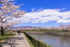 sakura-in-hokkaido sakura, cherry blossom, spring, season, seasons, trees, the real japan, real japan, japan, japanese, tips, resource, tricks, information, guide, community, adventure, explore, trip, tour, vacation, holiday, planning, travel, tourist, tourism, backpack, hiking http://www.therealjapan.com/subscribe/