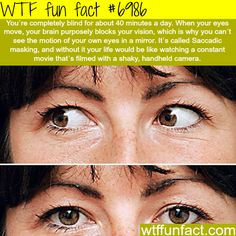 WTF Facts - Page 289 of 1045 - Funny, interesting, and weird facts Wow Facts, Wtf Fun Facts, True Facts, Funny Facts, Random Facts, Crazy Facts, Random Stuff, Bizarre Facts, Random Things